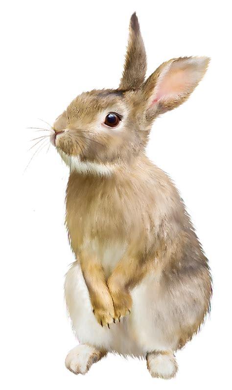 size quilt rabbit png transparent images png all