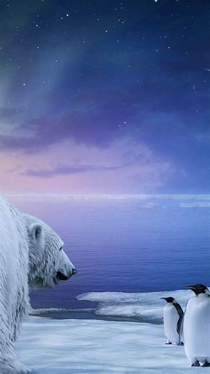 Polar Bear Lights Northern Wallpapers Night Galaxy