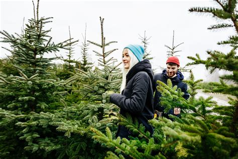best real christmas trees by me the most popular types of trees