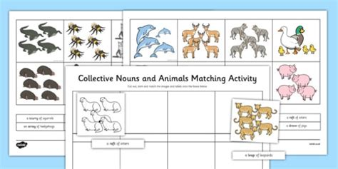 collective nouns groups of animals worksheet activity sheet collective