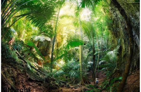 Jungle Krabi Thailand Wall Mural