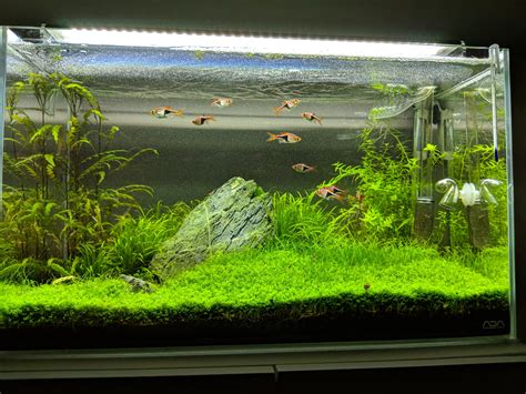 Ada Aquascape by Ada 60p Iwagumi Aquascape Plantedtank