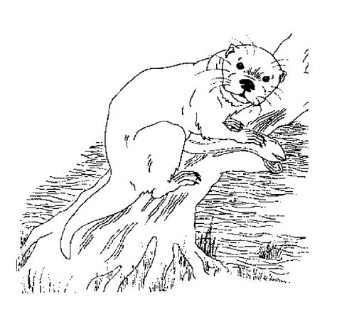 Sea Otter Coloring Pages