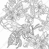 Coloring Adult Bee Pages Adults Honey Bumble Colouring Flowers Printable Bumblebee Cartoon Digital Books Pdf Draw Honeybee Etsy Sold sketch template