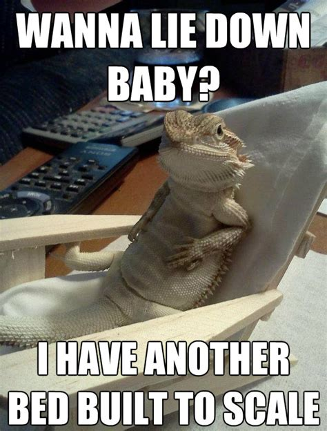 Dragon Memes - 30 bearded dragon memes to make you smile animalpages