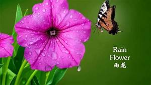 Beautiful rain flowers and calm piano music for relaxation ...