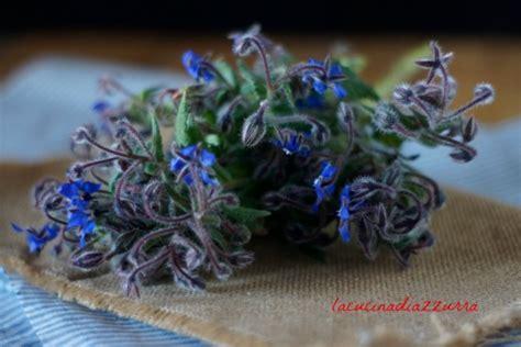 fiori di borragine ricette fiori di borragine fritta la ricetta delle donne di