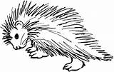 Coloring Porcupine Printable Ages Educative Educativeprintable Sheets sketch template