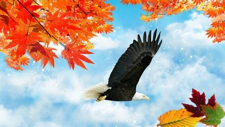 eagles autumn birds animals background wallpapers