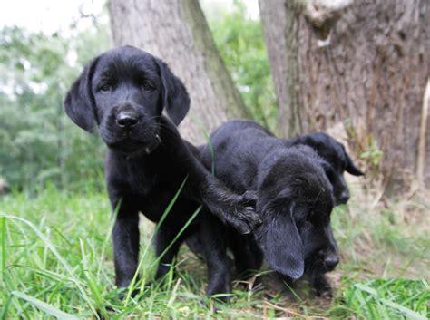 august  hundeurlaubde blog urlaub mit dem hund