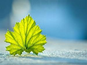 Beautiful, Leaf, In, The, World