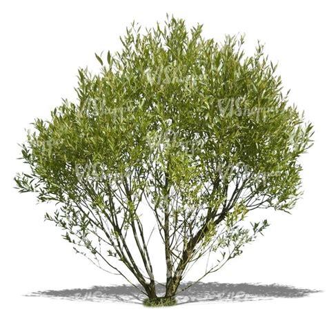welchen baum pflanzen welchen baum pflanzen k 252 nstliche bonsai baum begr 252 223 ung pflanze gef 228 lschte blume gr 252 ne twinnote org