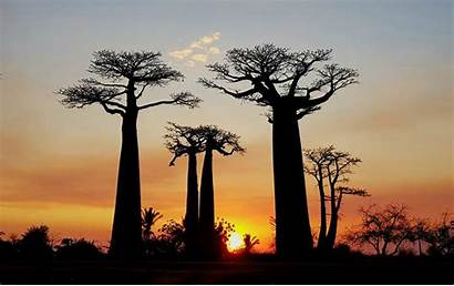 Baobab Avenue Tour Madagascar