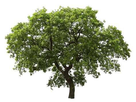 Tree Images No Background by Bush And Trees Clipart 20 Free Cliparts