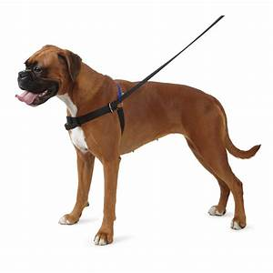 what dog training accessories do i need cheap dog supplies With dog training accessories
