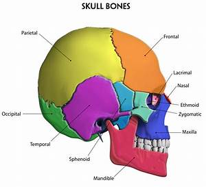Benefits Of Foot Zoning The Cranial Bones