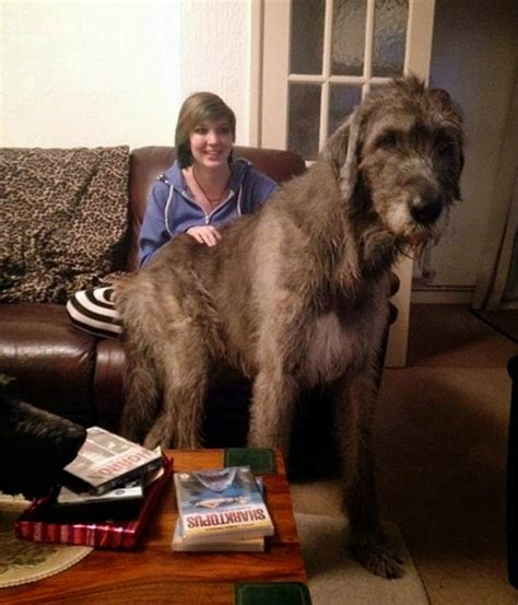 Mail2Day: Collection of 25 Huge Dogs Around the World