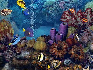 Living Marine Aquarium 2 Animated Wallpaper - pin living marine aquarium 2 271970jpeg on