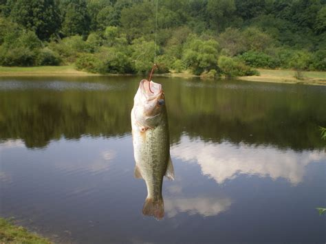 10 Lb Largemouth Bass Caught By Neil Rayle Fishing In