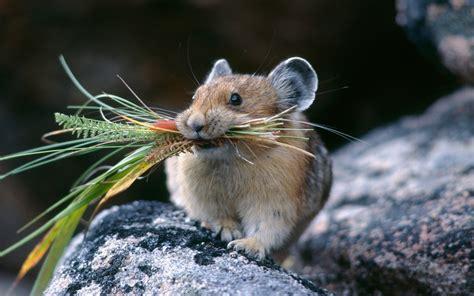 Hamster Eat Bush Wallpapers Hd Desktop And Mobile