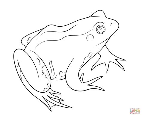 Realistic Frog Drawing At Getdrawingscom Free For