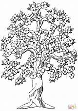 Coloring Apple Tree Pages Flowering Printable Drawing Dot sketch template