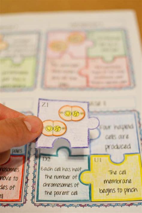 meiosis puzzle activity math  demand