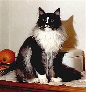 Hochzahlen Berechnen : ahnenverlust und inzuchtkoeffizient katze cat kat poes katt felis chatte gatto gato kot ~ Themetempest.com Abrechnung