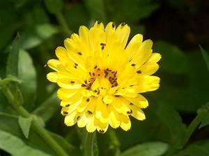 Schwarze Käfer Im Garten : rapsglanzk fer wir sind im garten ~ Lizthompson.info Haus und Dekorationen