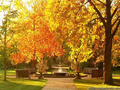 garden autumn garden autumn wallpaper 1024x768 30369