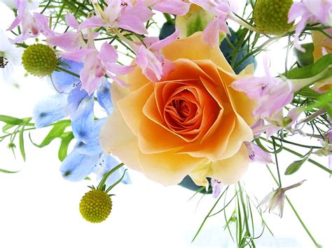 free pic of flowers free flower wallpaper for desktop beautiful flowers free images at clker com vector clip art