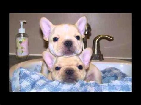 Tiny Non Shedding Dog Breeds by Top 10 Best Small Dog Breeds Youtube