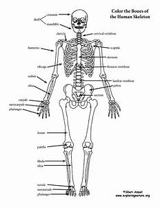 Skeleton  Labeled  Coloring Page