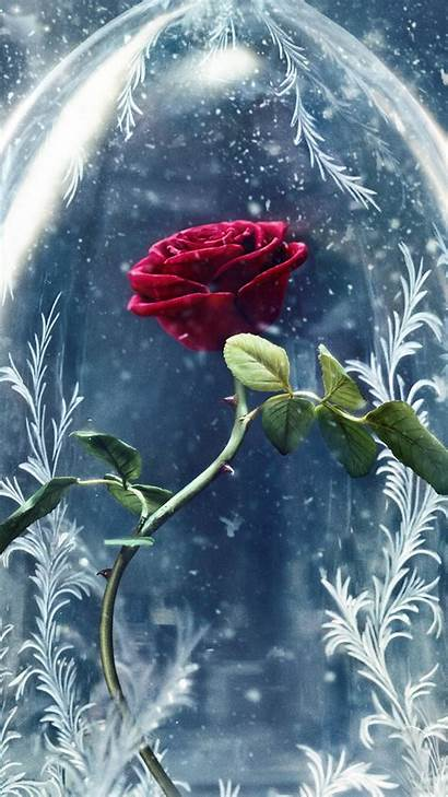 Beast Rose Beauty Wallpapers Movies Disney Wall