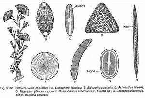 Diatom Diagrams