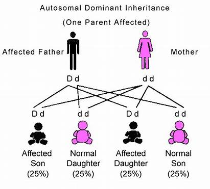 Dominant Autosomal Inheritance Genetics Genetic Mendelian Pattern