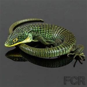 Pair of Green Mexican Alligator Lizard | Alligators ...