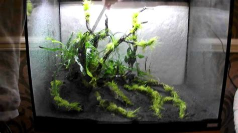 Aquascape Substrate by Aquascape Using Tropica Plants Substrate And Fertilizers