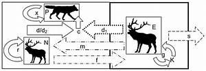 Diagram Of The Modeled Predator