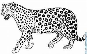 Dessin Jaguar Facile : nos jeux de coloriage guepard imprimer gratuit ~ Maxctalentgroup.com Avis de Voitures