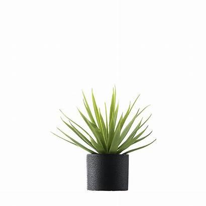 Plant Potted Cartoon Vase Transparent Palm Solo