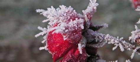 brautkleider fã r den winter blumen für den garten im winter doorbs
