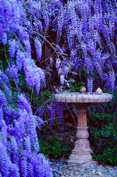 1000 Images About Witches Garden On Pinterest Gardens