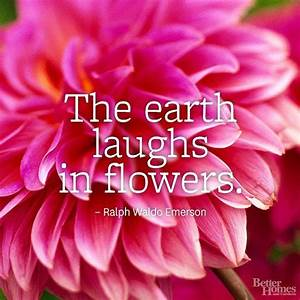 Flower Quotes | Just love, The white and Happy earth