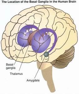 Psych 2210 Study Guide  2013-14 Segert