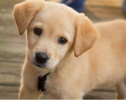 Training Potty Puppy Lovers Dog Basics