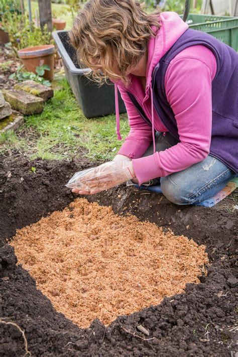 Im Garten Essbar essbare pilze im garten z 252 chten so legt ein pilz
