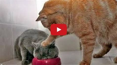 The Funniest Animal Video Clips on the Planet [Video