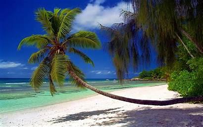 Landscape Nature Palm Tropical Beach Trees Summer