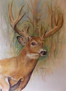 Buck Whitetail Deer Pencil Drawings